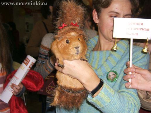 """""""Рождественская белка"""""""